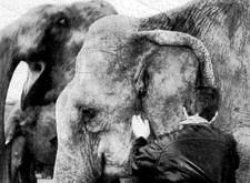 Bezoek achter de schermen van Circus Krone: de olifant luistert aandachtig naar wat Juliette hem in het oor fluistert (1996)