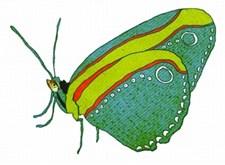 Een blauw, groen en rood gekleurd vlindertje uit 'Rare snuiters'
