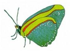 Een vlindertje uit 'Rare snuiters'