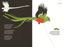 A double page from the book: quetzal and caterpillar