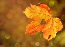Door de zon verlicht herfstblad met hartvormig gaatje erin