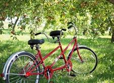 Tandem in appelboomgaard