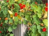 Verhoogde plantenbak vol bloeiend groen